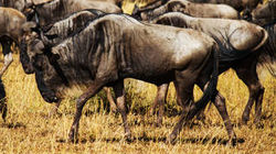 WatchStreem - Africa's Predator Zones