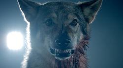 Ezstreem - Teen Wolf