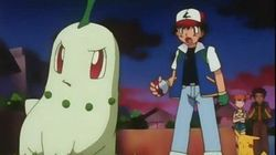 Chikorita's Big Upset