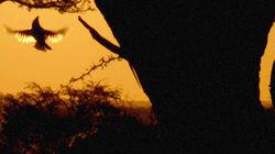 WatchStreem - Africa's Wild Havens