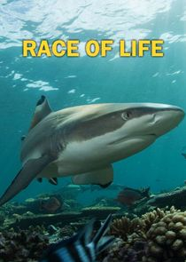 cover for Race of Life