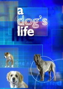 Ezstreem - Watch A Dog's Life
