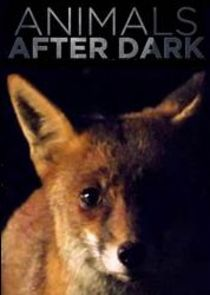 Animals After Dark