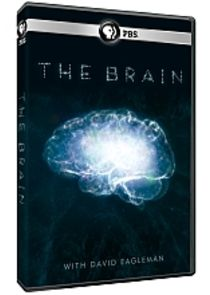 The Brain with David Eagleman