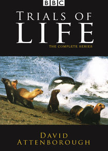 The Trials of Life: A Natural History of Behaviour