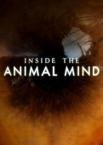 Inside the Animal Mind