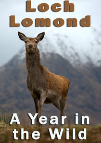 Loch Lomond: A Year in the Wild