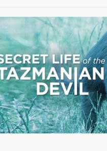 Secret Life of the Tasmanian Devil
