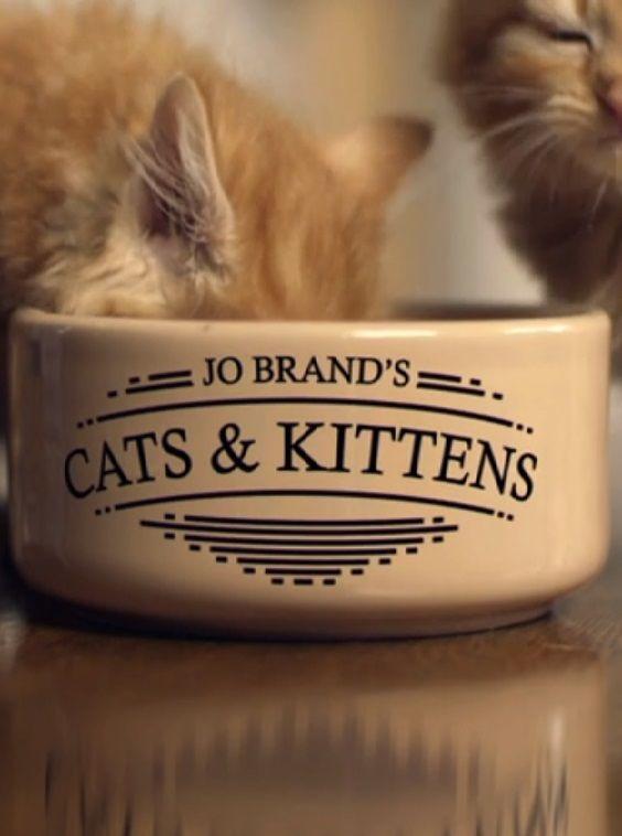 Jo Brand S Cats Kittens