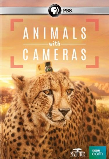 Animals with Cameras cover