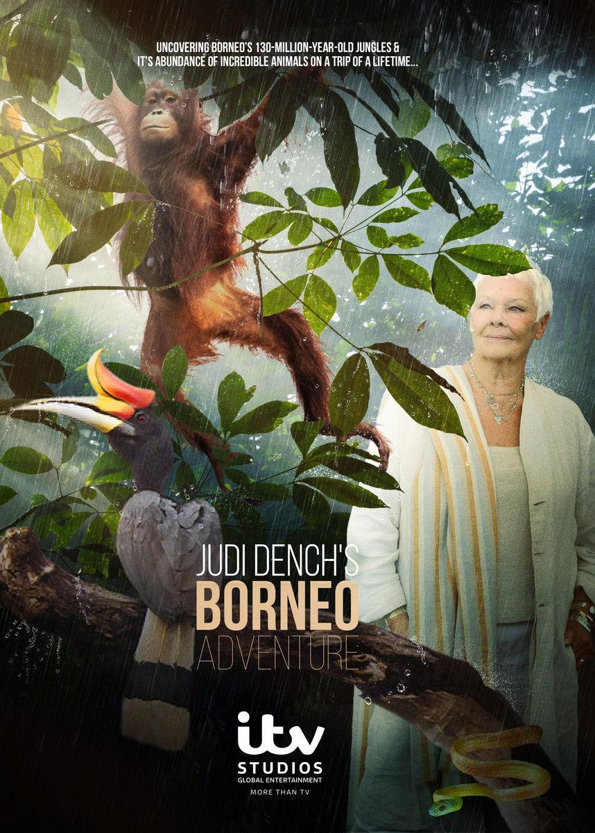 Judi Dench\u0026#39;s Wild Borneo Adventure | TVmaze