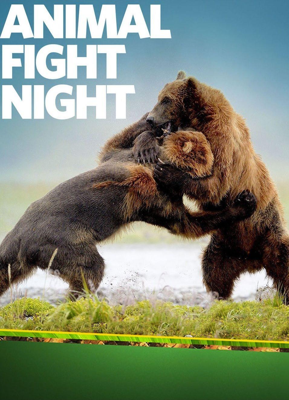 Animal Fight Night cover
