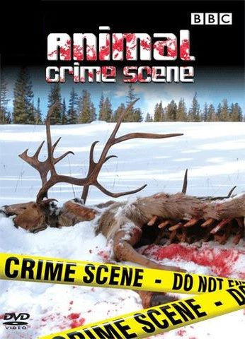 Animal Crime Scene cover