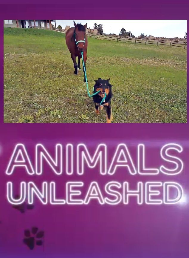 Animals Unleashed cover