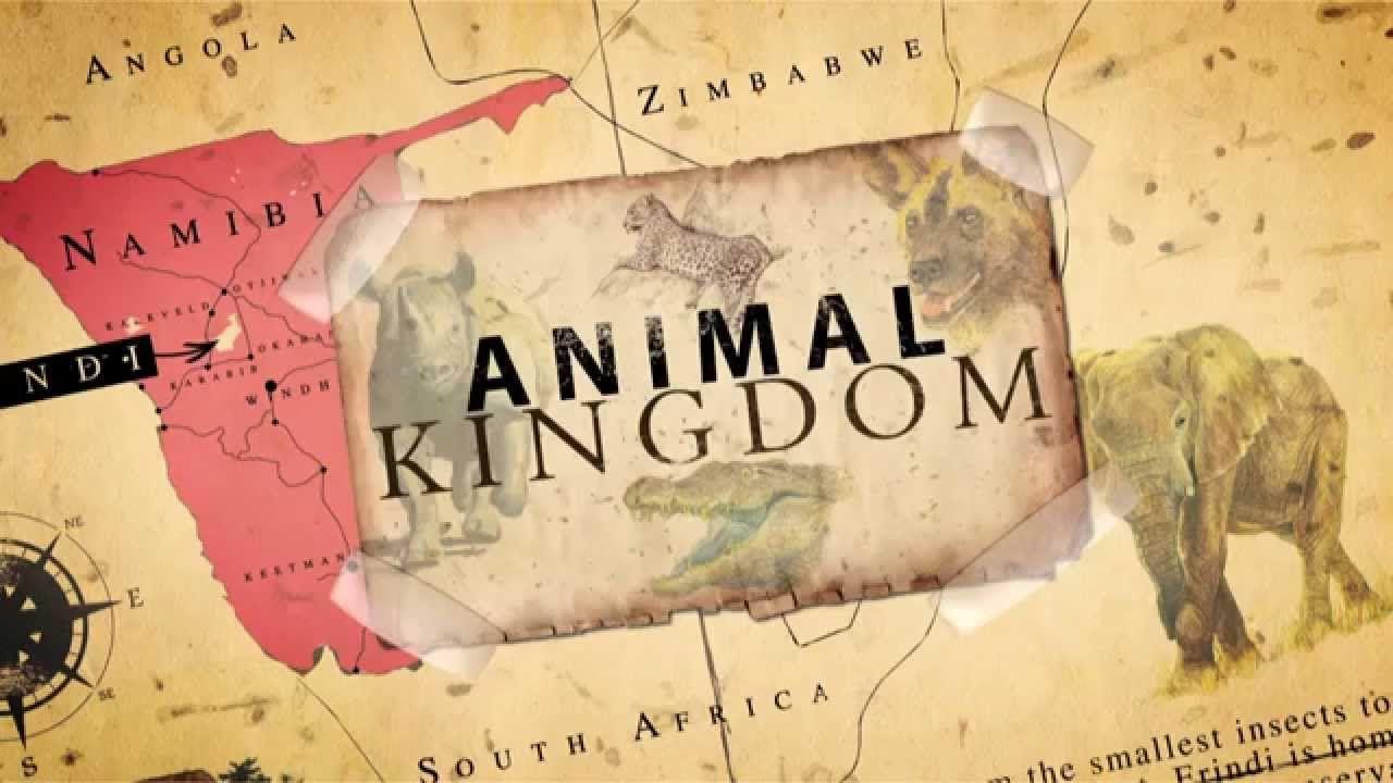 Animal Kingdom cover