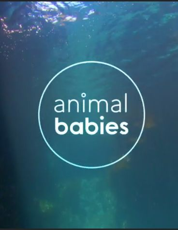 Animal Babies cover