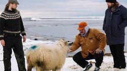 Matty's Icelandic Adventure