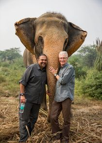Paul O'Grady: For the Love of Animals - India