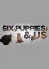 Six Puppies and Us