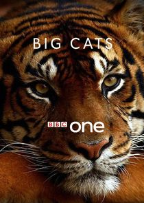 Watch Series - Big Cats