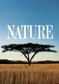 Watch Series - Nature