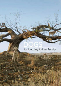 Dogs: An Amazing Animal Family