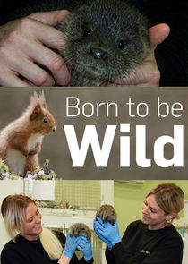 Watch Series - Born to Be Wild