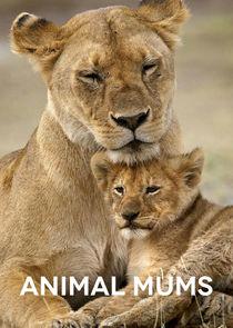 Animal Mums