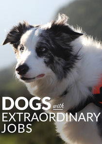 Watch Series - Dogs with Extraordinary Jobs