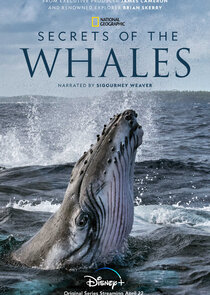 Watch Series - Secrets of the Whales