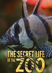 Watch Series - The Secret Life of the Zoo