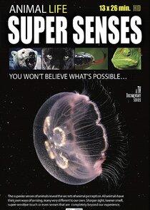 Watch Series - Super Senses