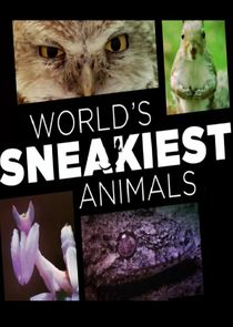 World's Sneakiest Animals