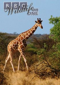 Wildlife on One
