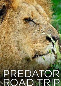 Predator Road Trip