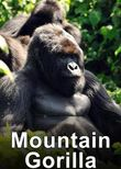 Mountain Gorilla: Mission Critical